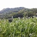 魯冰花29.jpg
