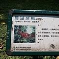 珊瑚刺桐15.jpg