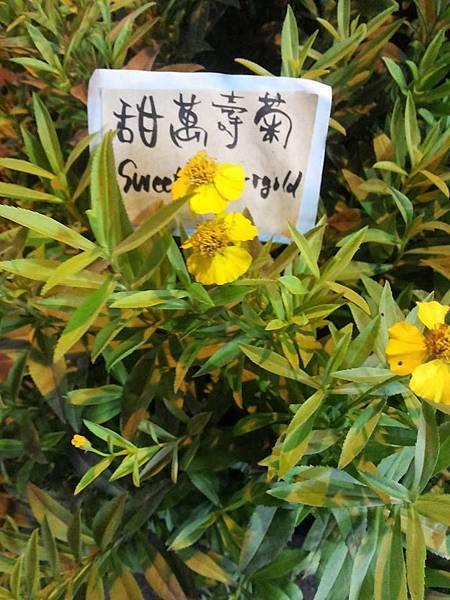 花花12.jpg