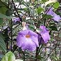 花卉7.jpg