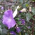 花卉2.jpg