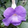 花卉4.jpg