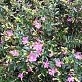 花卉12.jpg