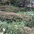 花卉11.jpg