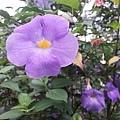 花卉8.jpg