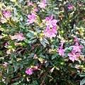 花卉13.jpg
