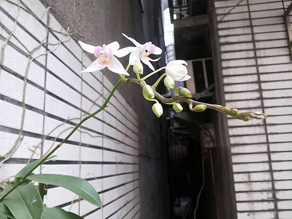 蘭花0417-2.jpg