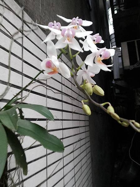 蘭花0424-1.jpg