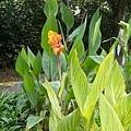 花卉28.jpg
