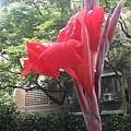 花卉31.jpg
