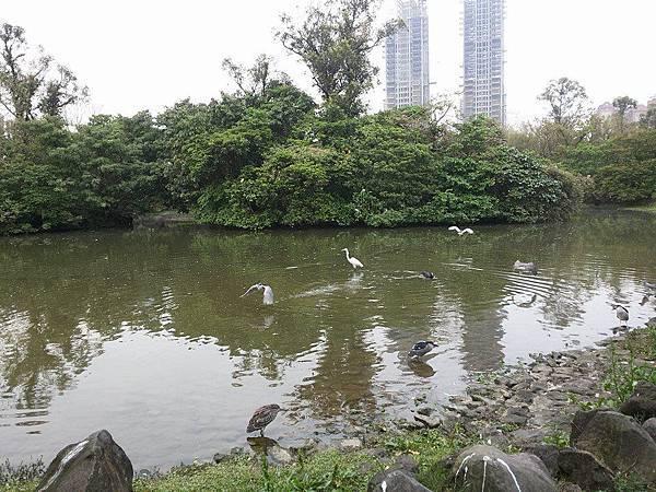 生態池20