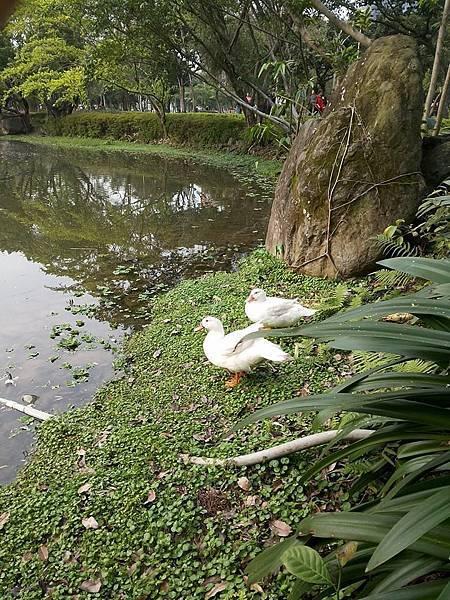 生態池10