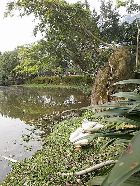 生態池11
