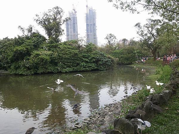 生態池21