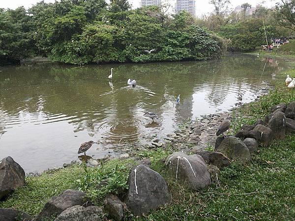 生態池22