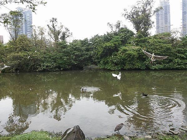 生態池23