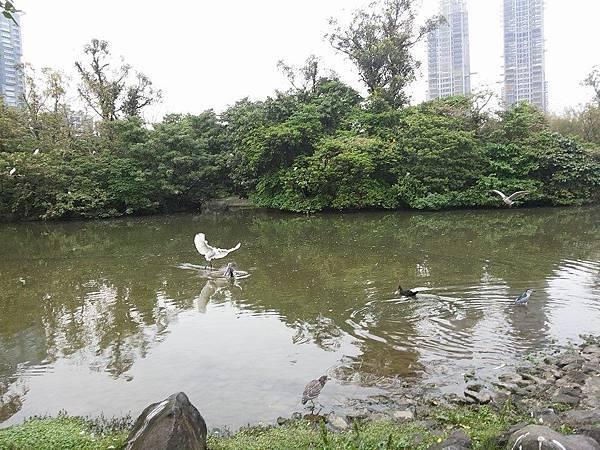生態池24