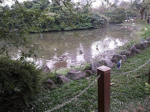 生態池28