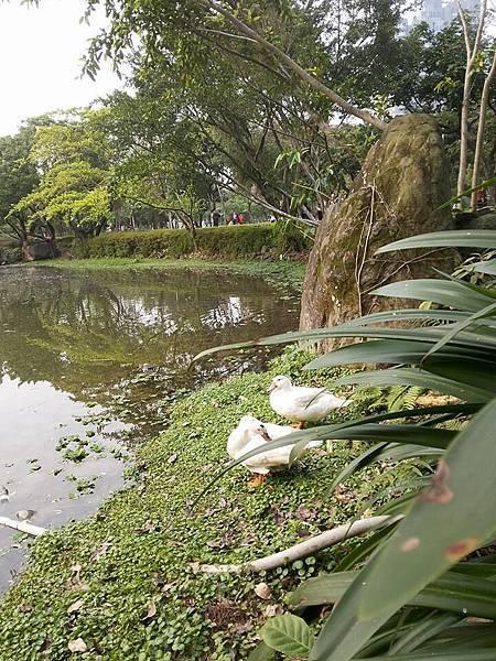 生態池12