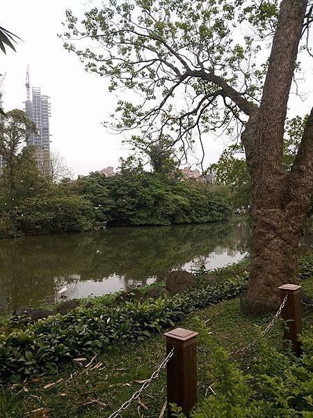 生態池15