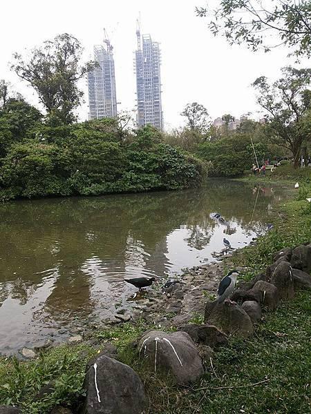 生態池26