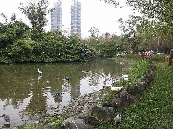 生態池19