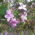 紫色小花30