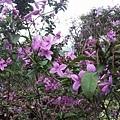 紫色小花2