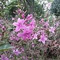 紫色小花11