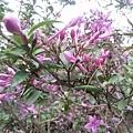 紫色小花15