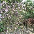 紫色小花29