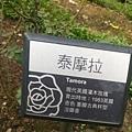 玫瑰1.jpg