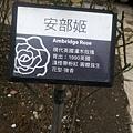 玫瑰15.jpg