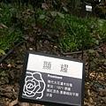 玫瑰64.jpg