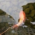 魚6.jpg
