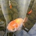 魚7.jpg