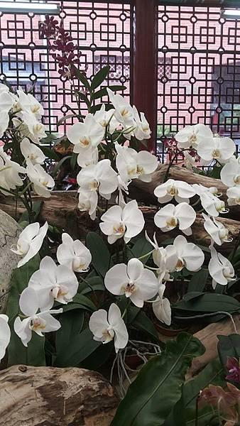 蘭花7.jpg