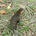 松鼠11.jpg