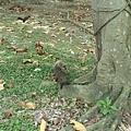 松鼠13.jpg