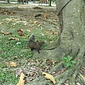 松鼠14.jpg