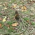 松鼠15.jpg