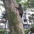 松鼠21.jpg