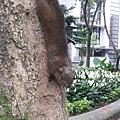 松鼠23.jpg
