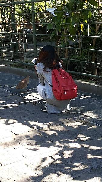 黑冠麻鷺5