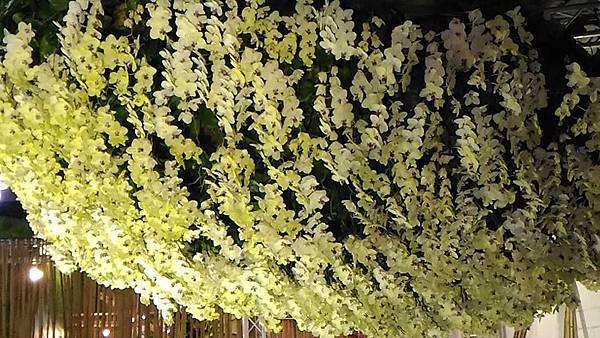 蘭花161