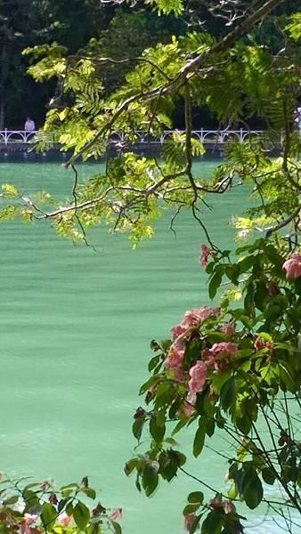 澄清湖26