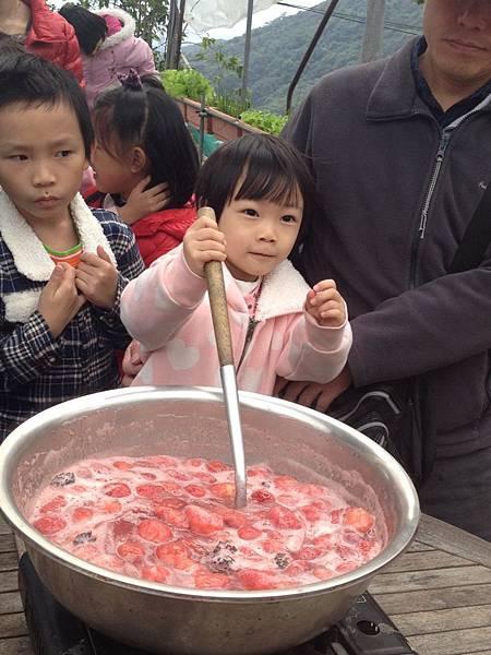 內湖採草莓、白石湖草莓