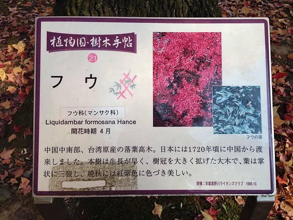 2013 關西賞楓 397