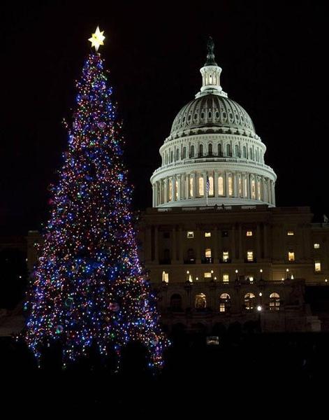 美國華盛頓國會的聖誕樹在12月8日被點亮。.jpg