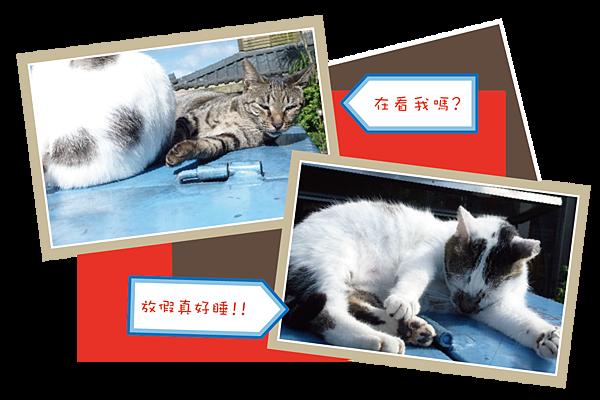 cat-1-01